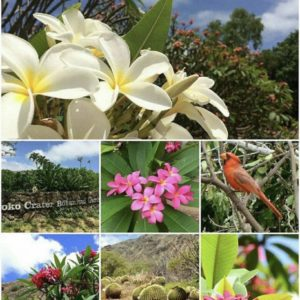 ハワイの植物園でプルメリア