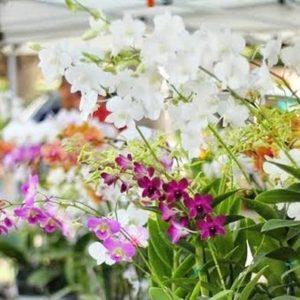 ハワイのお花屋さん