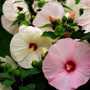 夏の終わりのお花